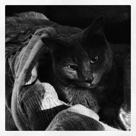 My cat Bobby