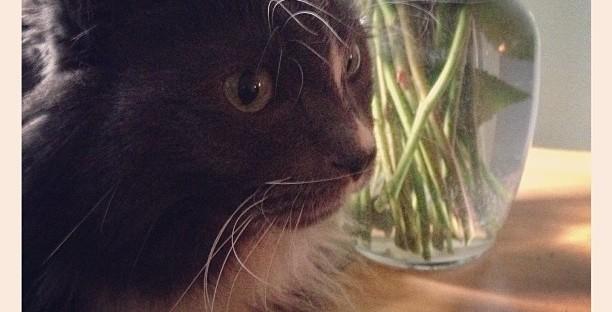 My cat Franky